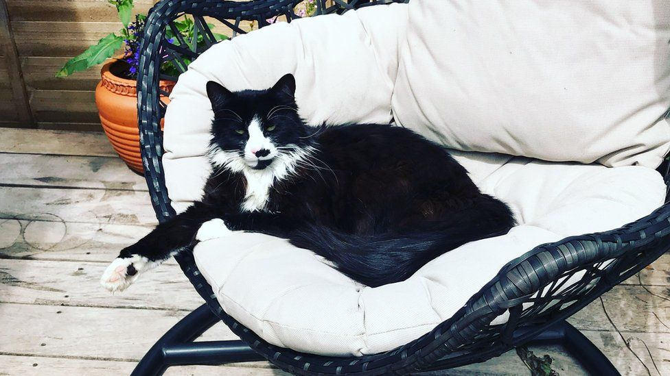 Smudge - одна из миллионов кошек, зарегистрированных в базе данных.