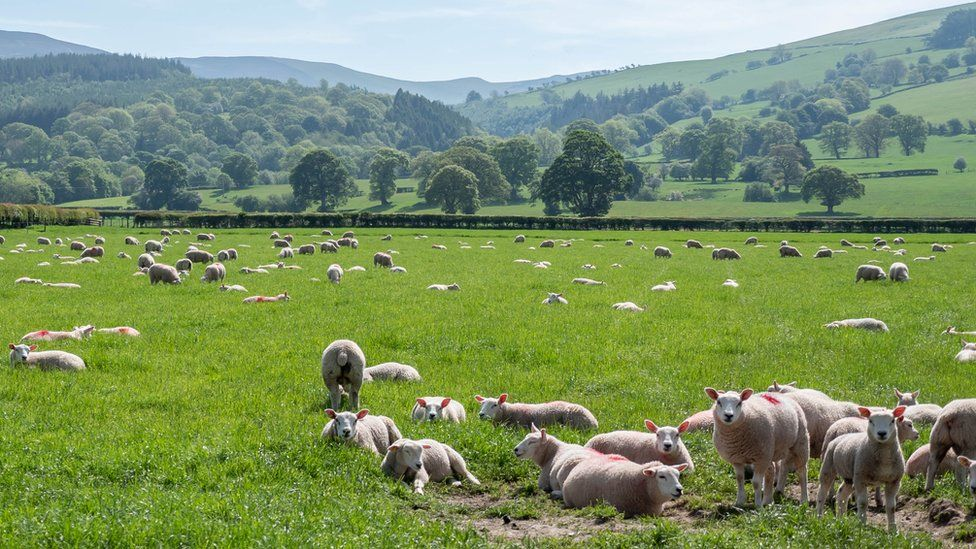 Некоторые более традиционные источники дохода фермерских хозяйств