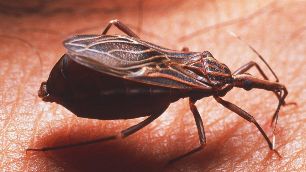 The technology will study Chagas disease, which is transmitted by assassin bugs