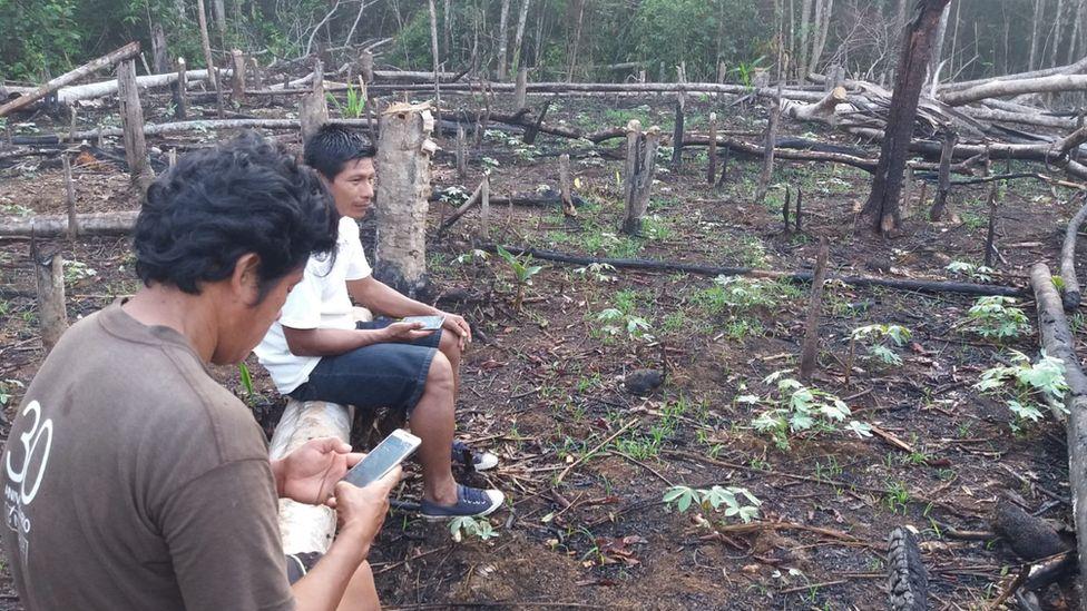 Общественные скауты расследуют незаконную вырубку лесов