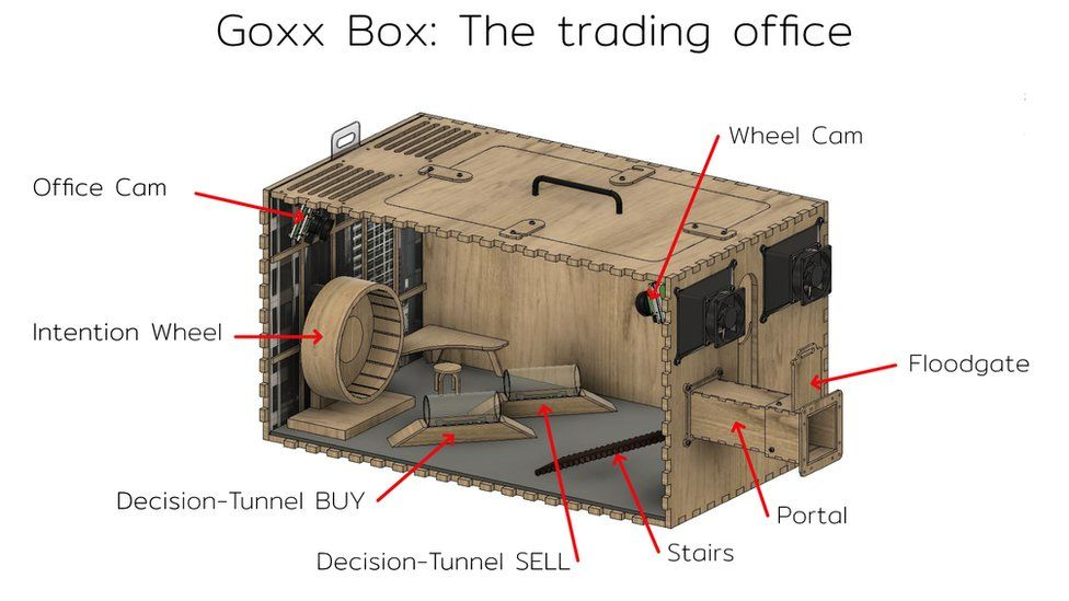 The surprisingly complex Goxx Box connects to Mr Goxx's normal cage