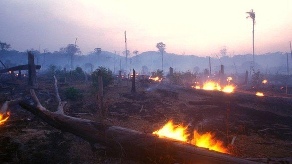 Image caption, Large parts of the Amazon, described as the lungs of the world, is being destroyed