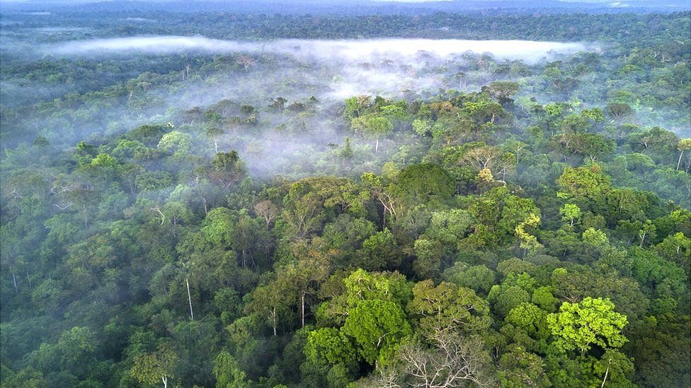 Image caption, The Amazon rainforest is home to one in 10 known species on Earth